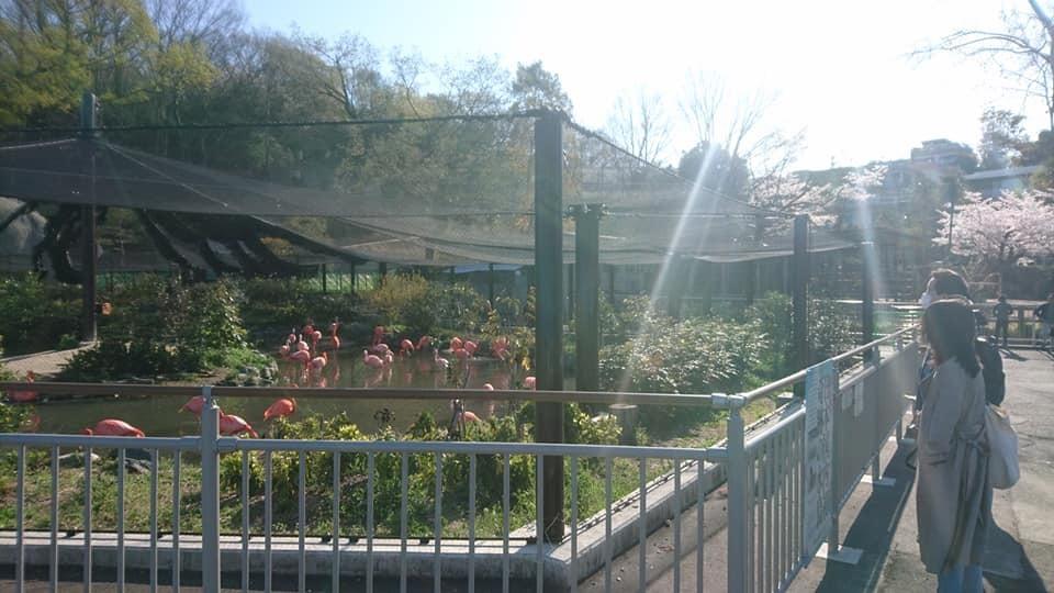 東山動植物園へ行ってきました!~桜の回廊編~_f0373339_16473402.jpg