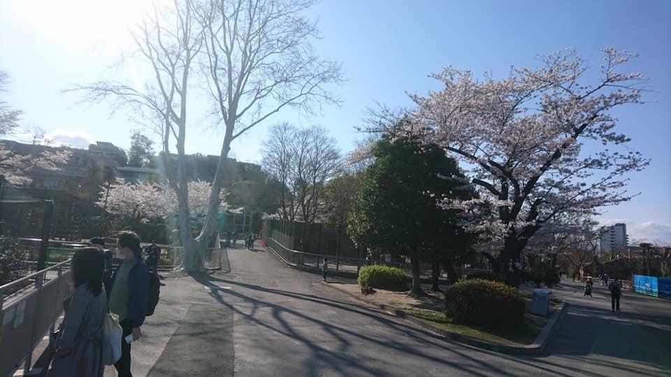 東山動植物園へ行ってきました!~桜の回廊編~_f0373339_16480574.jpg