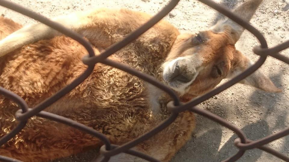 東山動植物園へ行ってきました!~桜の回廊編~_f0373339_16480609.jpg