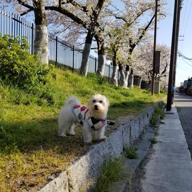 お花見散歩🐾_f0034444_21420248.jpg