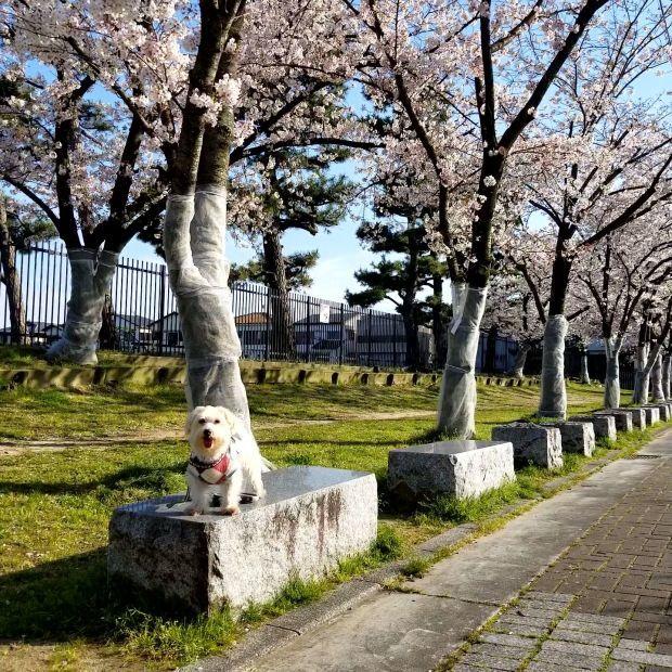 お花見散歩🐾_f0034444_21423595.jpg
