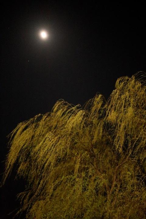 夜の散歩_c0342646_11384541.jpg