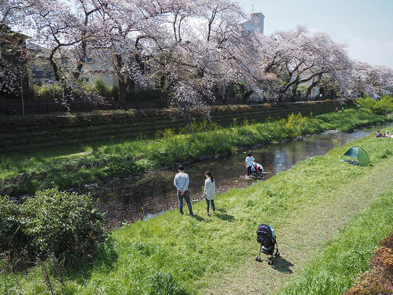近所の桜_a0003650_22055600.jpg