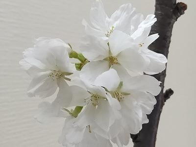 お元気ですか? 4月・5月の予定の延期のお知らせです。_e0173350_17031453.jpg