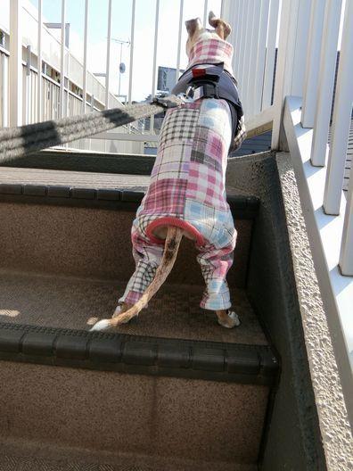 シニアなルビちゃんの階段事情。_b0234654_20305218.jpg