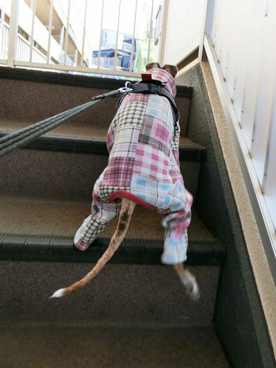 シニアなルビちゃんの階段事情。_b0234654_20305713.jpg