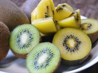 キウイの芽吹き(2020) 今年も完全無農薬、無化学肥料で育てます!_a0254656_18020129.jpg