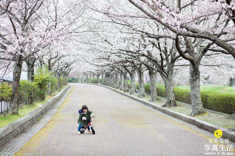 桜ロケーションフォト 2020_f0358558_15470455.jpg