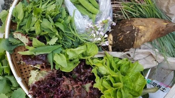 トラットリアフォンテの子ども弁当に筍と鎌倉大根提供4・2_c0014967_15370118.jpg
