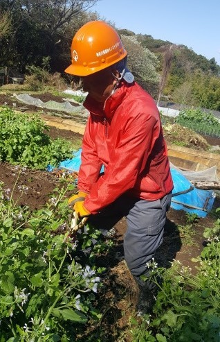 トラットリアフォンテの子ども弁当に筍と鎌倉大根提供4・2_c0014967_15371583.jpg