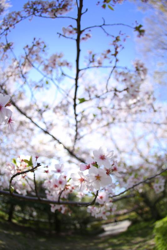 庄内緑地公園_f0367980_18092182.jpg