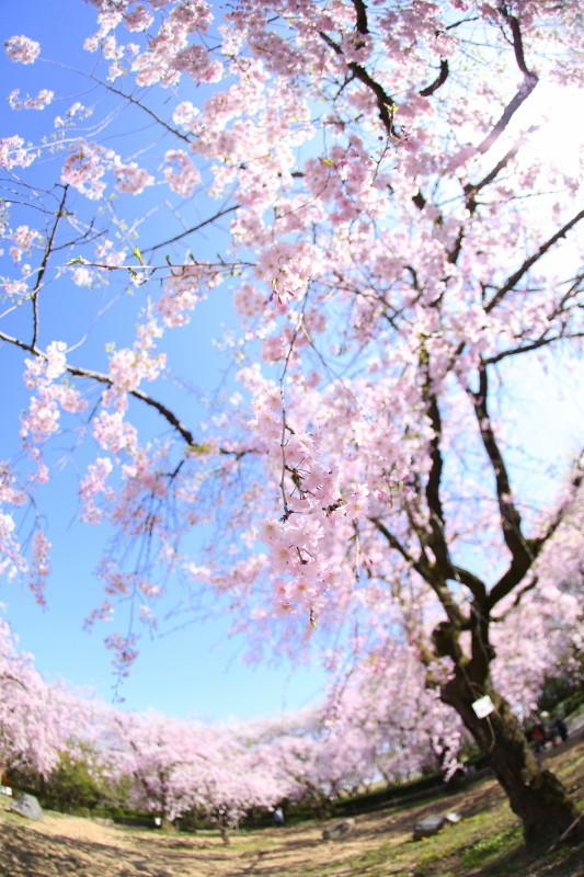 庄内緑地公園_f0367980_18093692.jpg