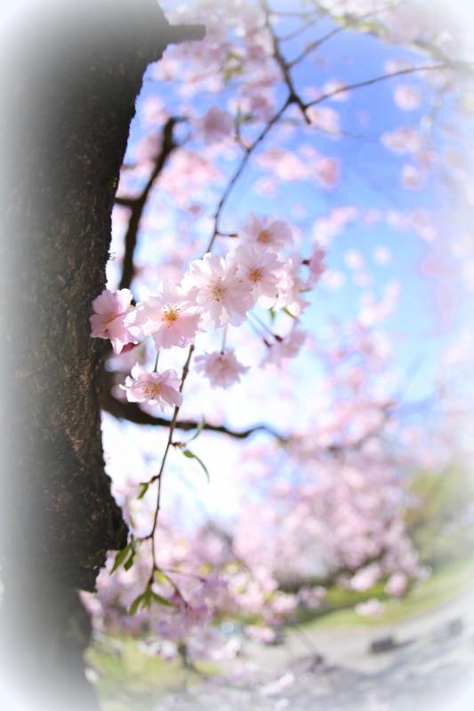 庄内緑地公園_f0367980_18095284.jpg