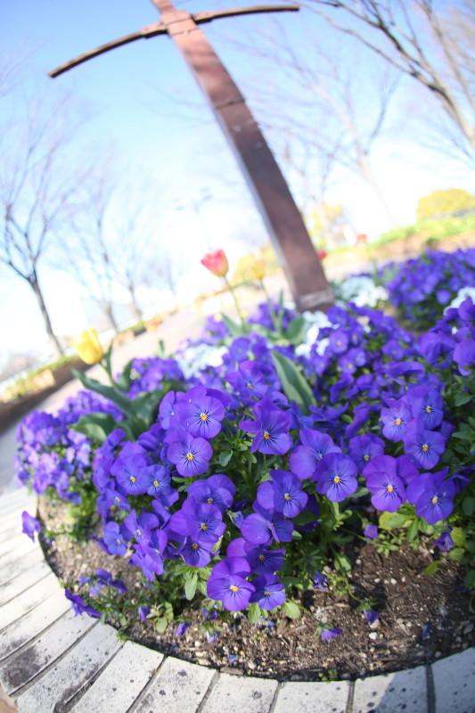 庄内緑地公園_f0367980_18111333.jpg