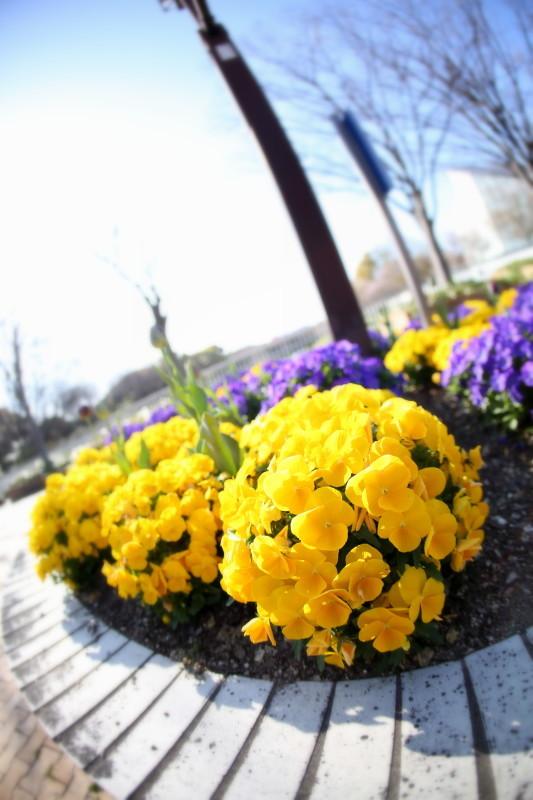 庄内緑地公園_f0367980_18114851.jpg