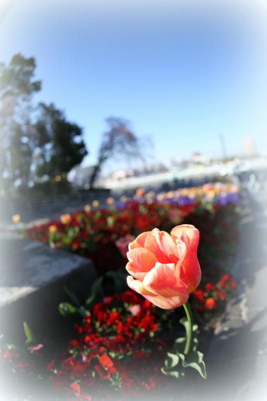 庄内緑地公園_f0367980_18124199.jpg