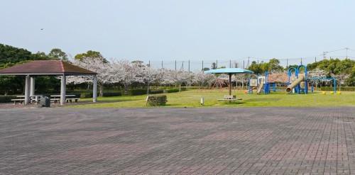 富浜緑地 満開を迎えたさくらの紹介R2.4.3_d0338682_09011963.jpg