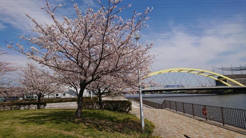中川口緑地 満開を迎えたさくらの紹介R2.4.7_d0338682_11485127.jpg