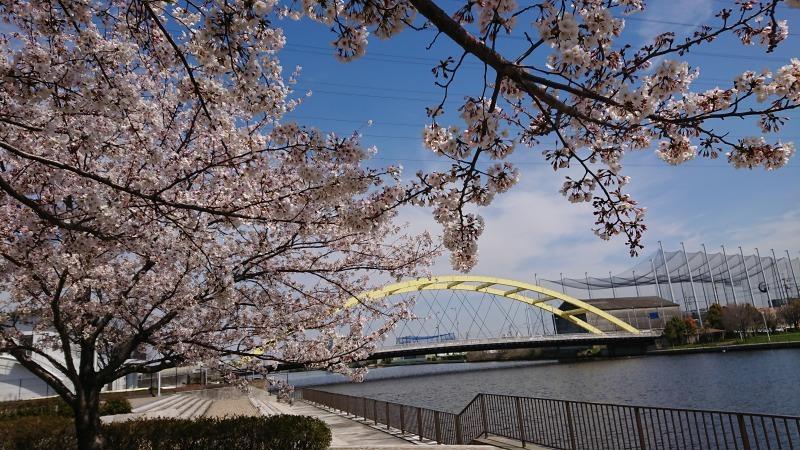 中川口緑地 満開を迎えたさくらの紹介R2.4.7_d0338682_11491884.jpg
