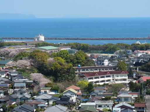 海咲diary 2020春_f0197985_13202343.jpg
