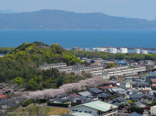 海咲diary 2020春_f0197985_13221540.jpg