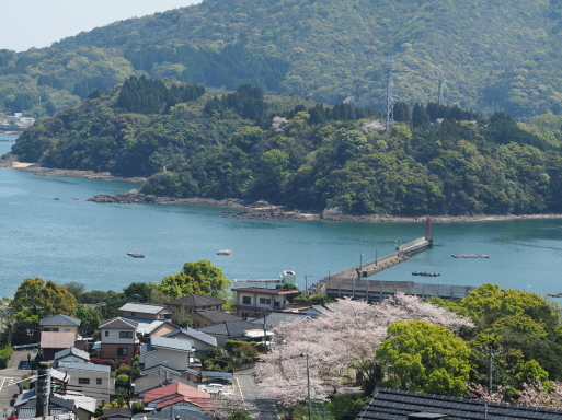 海咲diary 2020春_f0197985_13235700.jpg