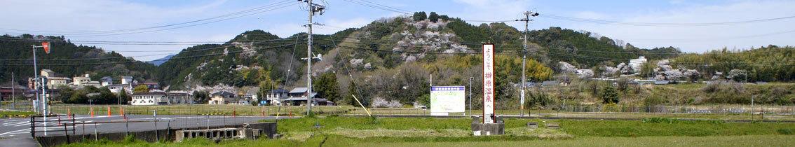 幅広く桜を楽しもう_b0145296_14140424.jpg