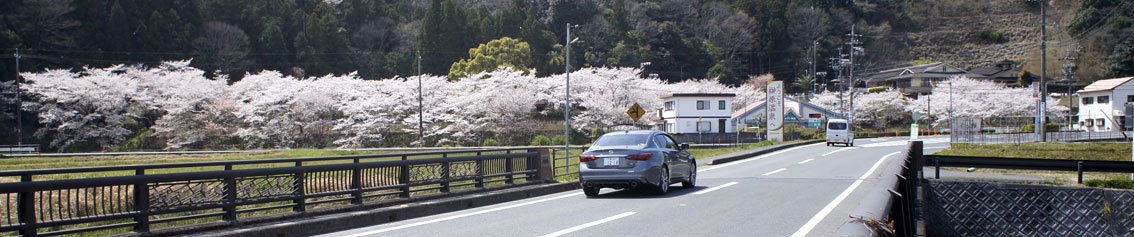 幅広く桜を楽しもう_b0145296_14140913.jpg
