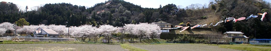 幅広く桜を楽しもう_b0145296_14141324.jpg