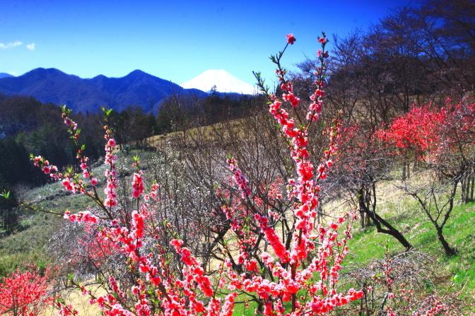 令和2年3月の富士 (30) 上野原の花桃の里の富士_e0344396_20420660.jpg