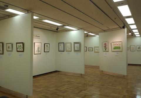 第20回「ボタニカルアート静岡葵」作品展_b0028299_20132940.jpg