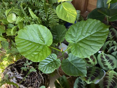 アトリエの玄関の土間の観葉植物_e0054299_11480184.jpg