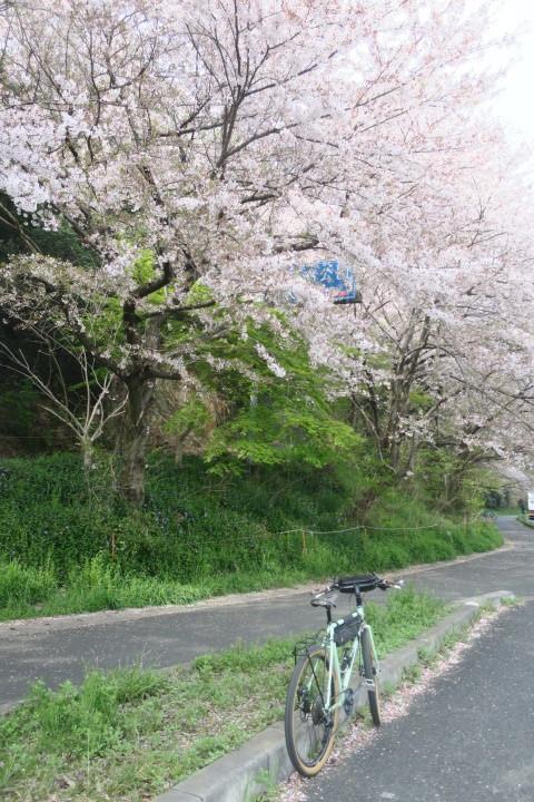 こんな時は1人自転車_c0132901_20254453.jpg