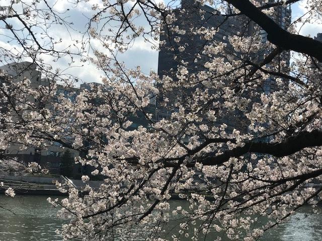 毎日桜。_a0050302_23560088.jpg