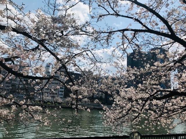 毎日桜。_a0050302_23560725.jpg