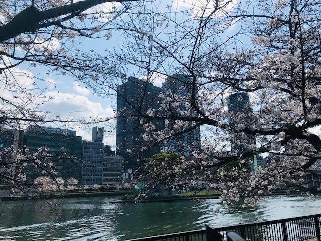 毎日桜。_a0050302_23561545.jpg