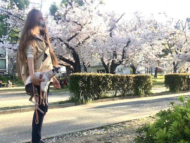 毎日桜。_a0050302_23572458.jpg