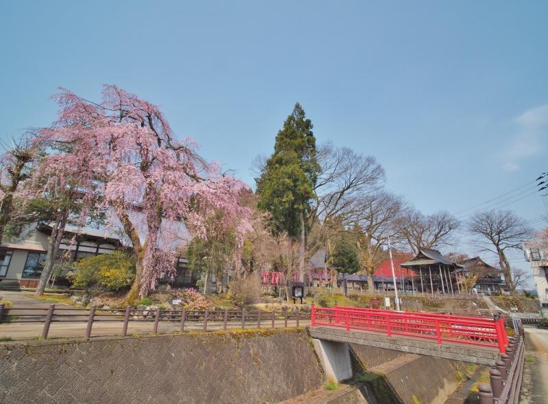 千手院の枝垂れ桜 ②_c0336902_20314122.jpg