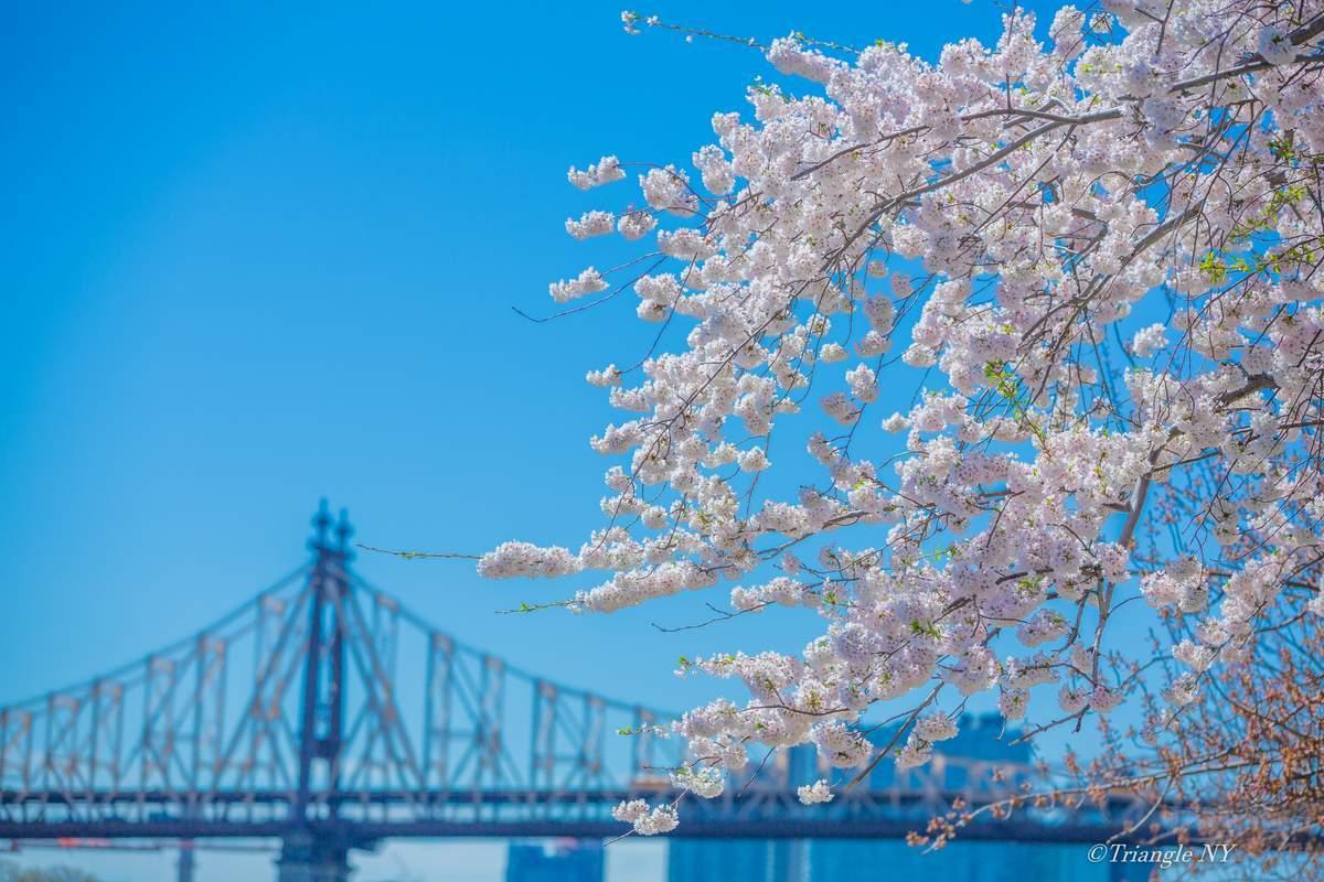 "Remember \""Spring in New York 2019\"" Vol.4_a0274805_00533245.jpg"