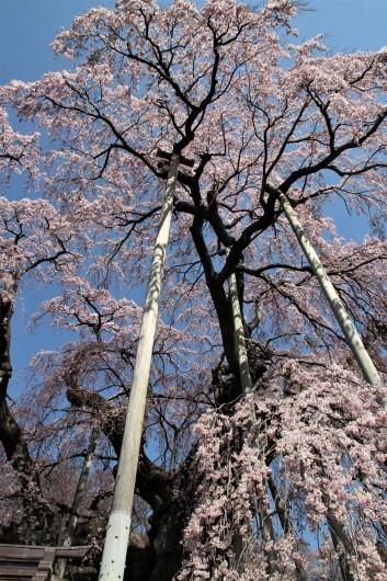 三春の滝桜_d0114414_14012877.jpg
