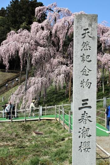 三春の滝桜_d0114414_14022501.jpg