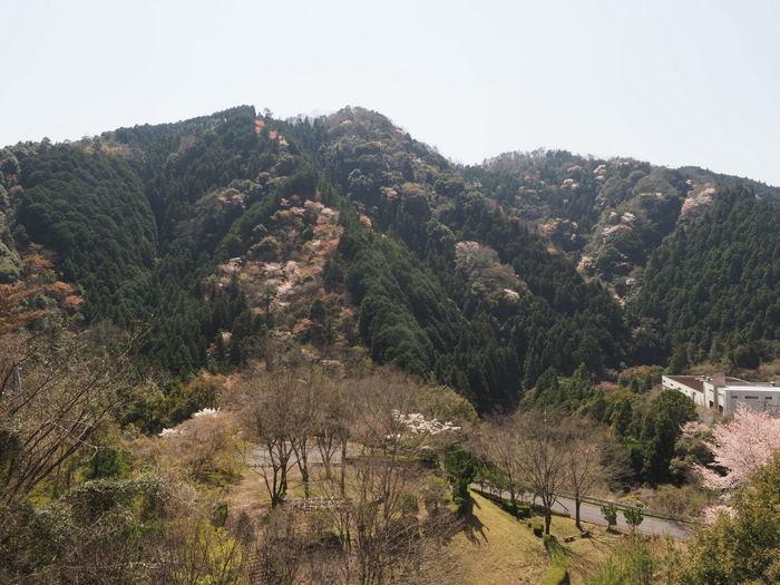 山々の山桜が満開_c0116915_00000035.jpg