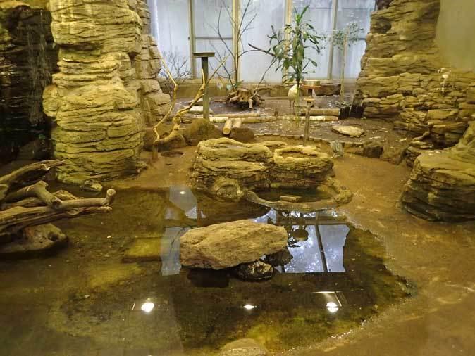上野動物園バードハウス大図鑑①~1F:コミドリコンゴウインコと国内唯一のマダガスカルトキ_b0355317_21525415.jpg