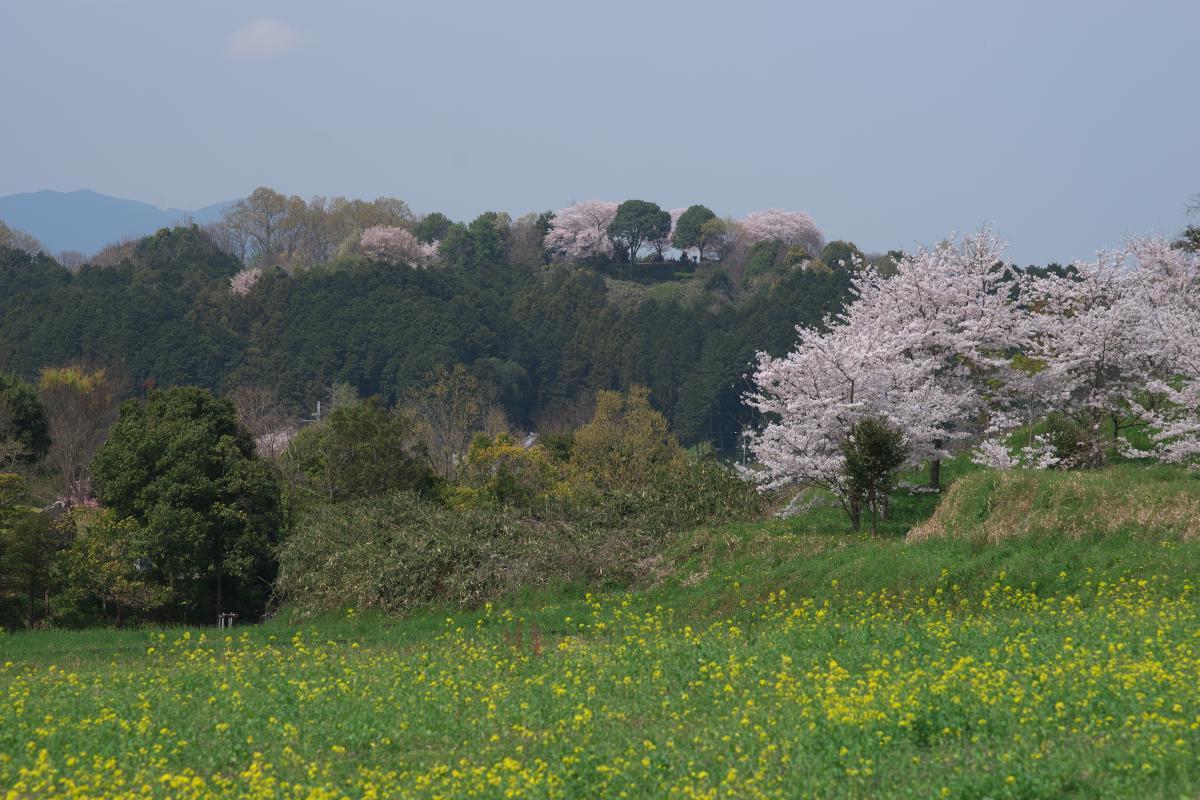 甘樫丘を望む_b0408917_18441987.jpg