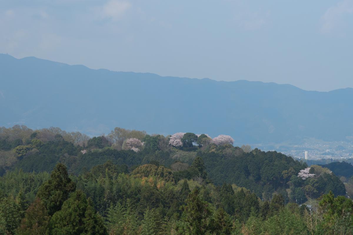 甘樫丘を望む_b0408917_18442938.jpg