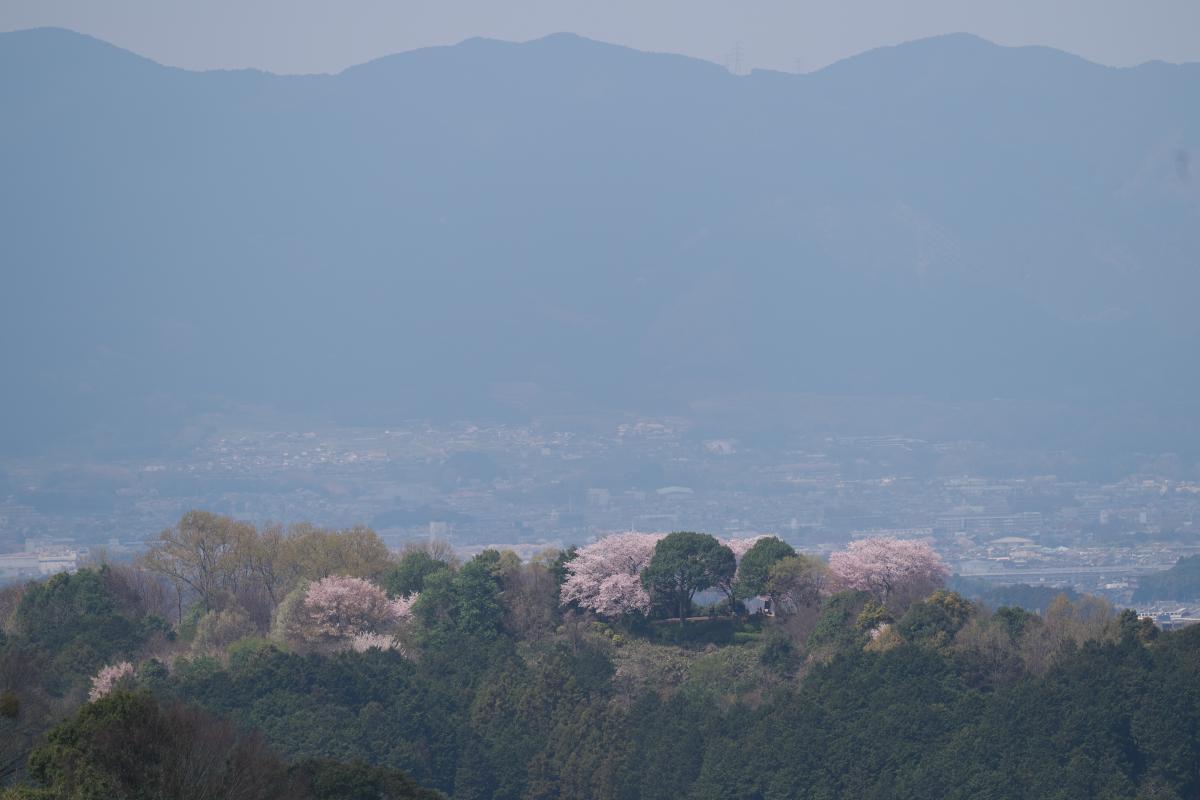 甘樫丘を望む_b0408917_18451747.jpg