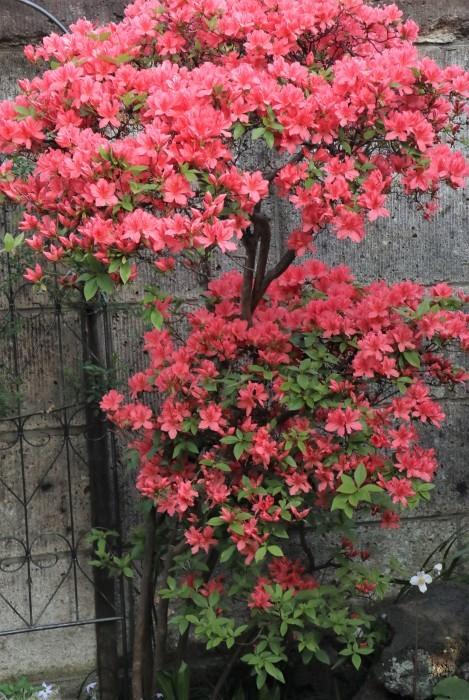 春 庭の花_d0150720_17251110.jpg