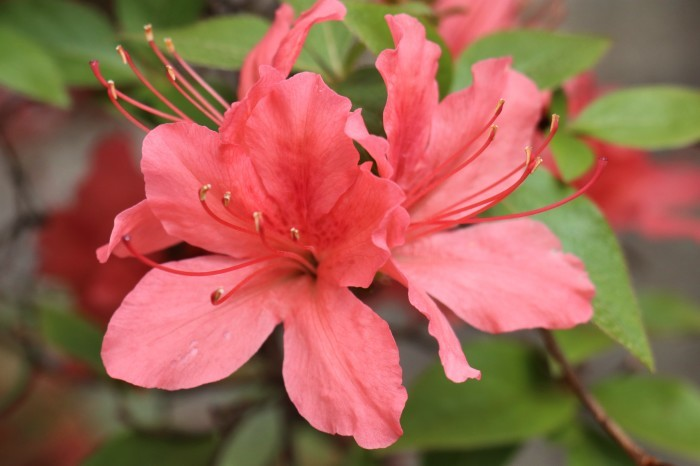 春 庭の花_d0150720_17261490.jpg