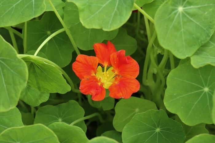 春 庭の花_d0150720_17274571.jpg