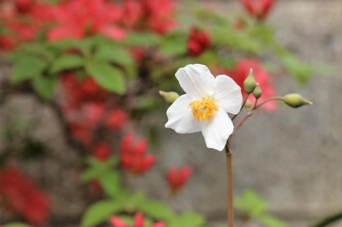 春 庭の花_d0150720_17302961.jpg